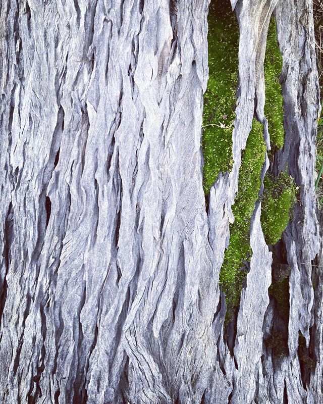 landscape-in-miniature-beautiful-weathered-timber-and-moss-just-out-of-york....an-entire-landscape-i