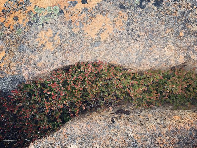 the-beauty-of-details-micro-tundra-like-landscapes-on-the-top-of-mount-wellington....beauty-can-be-s